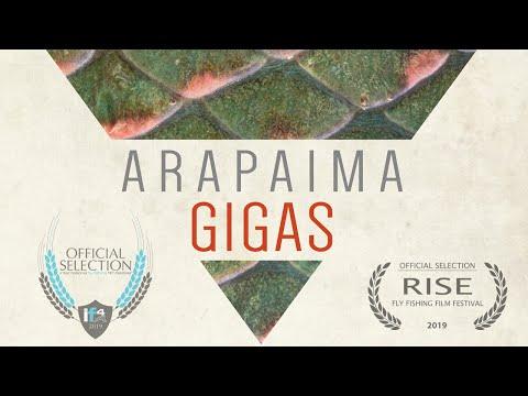 Arapaima GIGAS - Director's Cut Film Festival Version