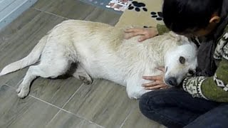 Homeless Dog with Cancer Living Alone on the Streets Only Wanted to be Hugged