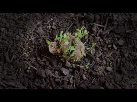 Morgen - Guerilla Gardening:  The Time Is Now