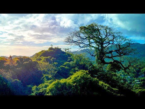 SSL 175 ~ Exploring an Extinct (maybe) VOLCANO! ~ Grand Etang, GRENADA ~ (in 4K UltraHD)