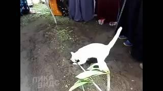 Кот на могиле Хозяина😢🤧