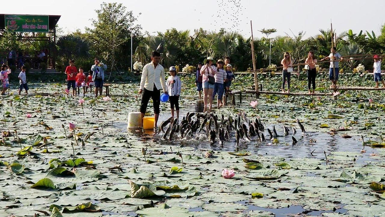 Cánh đồng Hoa Hồng|| Cá Lóc Bay|| Đẹp Lạ và giá vé vào cổng rẻ nhất Việt Nam