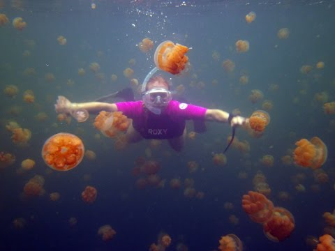 How Do Jellyfish Move ?
