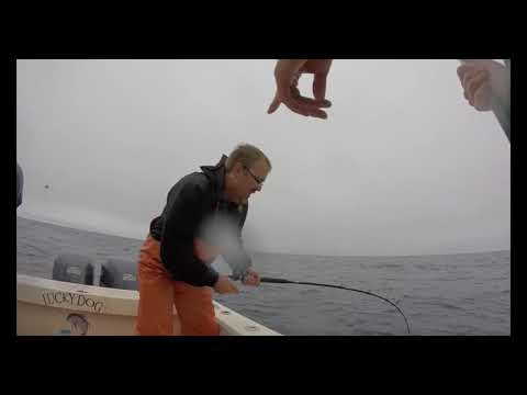 "One Day ""Run and Gun"" Tuna out of Westport Washington with Offshore Northwest Charter"