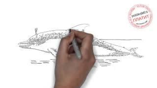 Рисуем дельфина Лопаку карандашом(Как нарисовать дельфина поэтапно с использованием карандаша за короткий промежуток времени. Видео рассказ..., 2014-06-24T14:50:27.000Z)