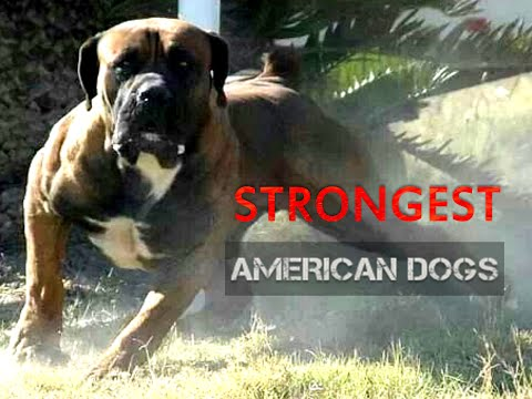 Five Strongest  American Dogs