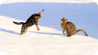 Забавные Кошки 2015! Смешное Видео с Кошками! Funny Cats Videos 2015 New /(Забавные Кошки 2015! Смешное Видео с Кошками! Funny Cats Videos 2015 New / https://youtu.be/qli3oHLdx44 Канал: ..., 2015-11-16T19:57:06.000Z)