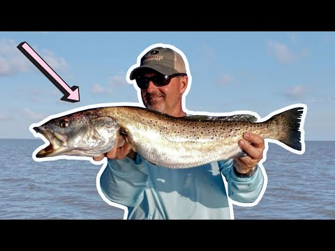 How To Catch Gator Speckled Trout In The Pamlico Sound (Outer Banks Speckled Trout Fishing)
