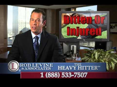 Dog Bite Lawyer -  Meriden, CT