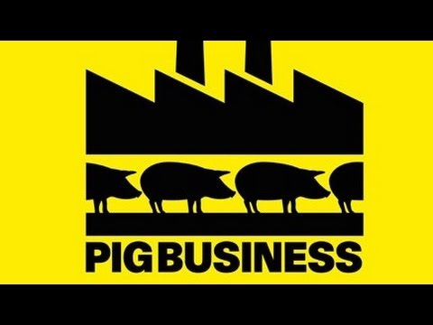 Pig Business, Factory Farms + Food Industry Corruption with Lady Tracy Worcester