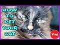 How To Pet Your Cat! How To Properly Pet Your Cat   Pet Your Cat 101  Cat Care