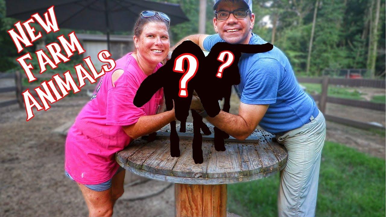 We Just Got 2 NEW FARM Animals!!