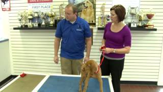 How To Keep Your Dog From Mouthing And Chewing With Kennelwood Pet Resorts Trainer, Matthew Bourisaw