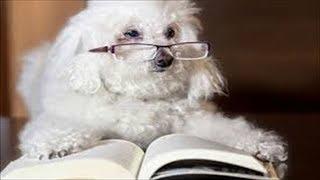 【爆笑間違いなし】おもしろ動物ハプニング集 Vol.45【マジで笑えるやん...
