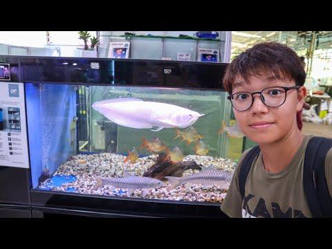 This Place Is LITERALLY An AQUARIUM SUPERMARKET - Qian Hu Fish Farm Singapore