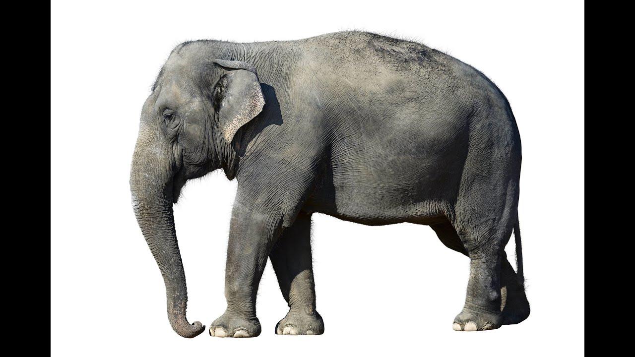 Elephant animals for children kids videos kindergarten preschool learning toddlers sounds songs - Image elephant ...