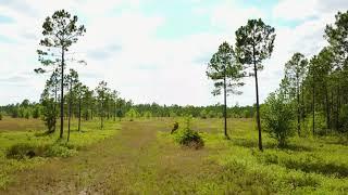 CR 121 50 Acres VIDEO 01