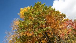"""Т. и С. Никитины """"Осенний лес"""" и мои фото осени"""