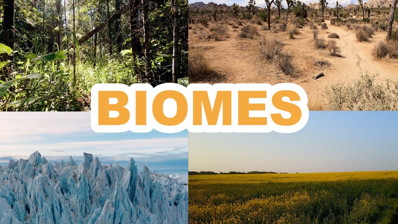 What are Biomes? Learn about Biomes & Ecosystem   Lattu Kids   Learn Geography 🐢🏞