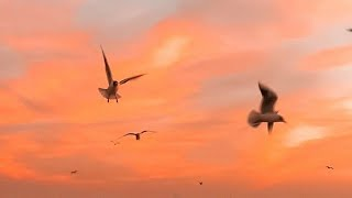 Ako Pa Ba Ang Aamin Eurika.mp3