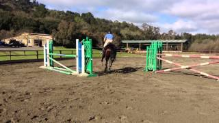 Godiva 2 - California Riding Academy