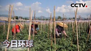 [今日环球] 两会声音 多措并举 巩固脱贫攻坚成果 | CCTV中文国际
