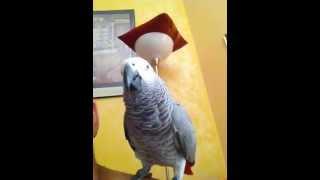 Papagalul Paulie face spectacol part.9