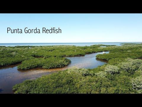 Punta Gorda Redfish