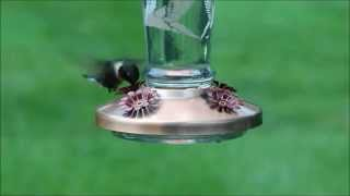 Solar Lighted Color Changing Copper & Glass Hummingbird Feeder Day & Night