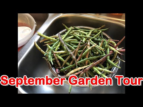 Sept 2019 Garden Tour: Pinkeye Purple Hull Peas, Loofah gourd, Hyotan Squash and More