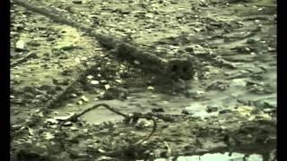 Путь Днепра (2003)