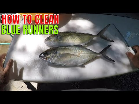 HOW TO CLEAN A BLUE  RUNNER
