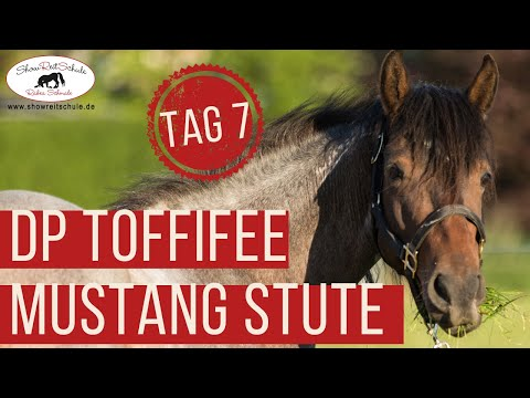 Rabea Schmale – Mustang Makeover 2018 –  7. Tag – witzig – DP Toffifee