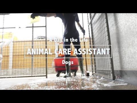 Day In The Life Of An RSPCA Animal Care Assistant: Dogs