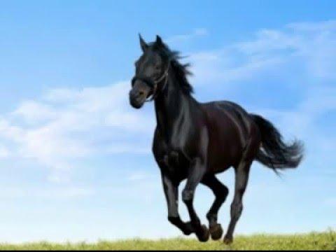 Китайский любовный гороскоп на год Петуха для Лошади
