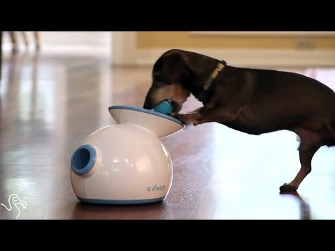 Keep Your Smart Dog Busy With These Cool Inventions