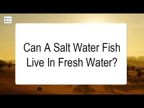 Can A Salt Water Fish Live In Fresh Water