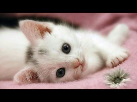 TOP 10 Video Anak Kucing Terlucu dan Menggemaskan | Kumpulan Video Lucu