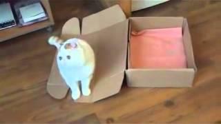 Кот  и Коробка  Cat Snoopy and Box(Если вам грустно, скучно или просто нечем себя занять просто Смотрите видео, улыбайтесь, настраивайтесь..., 2014-02-03T12:37:26.000Z)