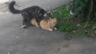 Порнуха у кошек (часть 2)