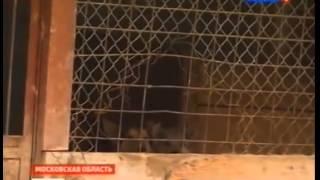 В Москве готовится к закрытию приют для бездомных животных