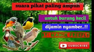 SUARA PIKAT AMPUH UNTUK BURUNG KECIL | DIJAMIN LANGSUNG NYAMBERR..!!