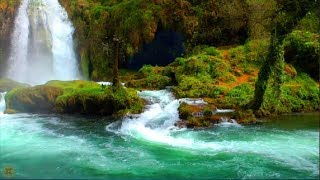 8 Hour Nature Sound Relaxation Soothing Forest Birds, Relaxing Sleep Sounds Without Music, Waterfall