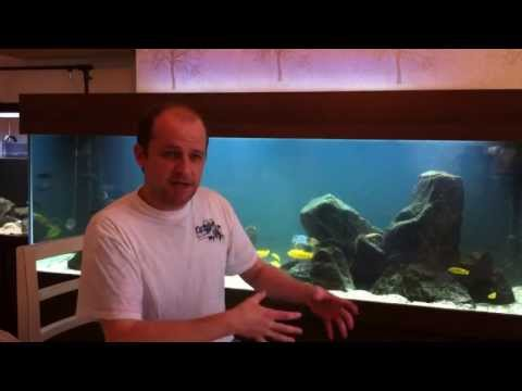How to Clean a Fish Tank - African Cichlids - #6 Tank Updates Thursday's