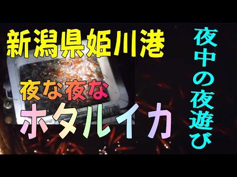 新潟県 糸魚川市ホタルイカを掬いに行って見ました。