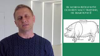 Як визначити масу тварини / Как определить массу животного