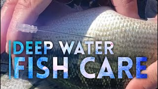 How to care for deep water bass. Learn how to deflate a fish bladder.