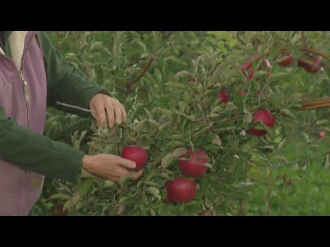 Buffalo's Best Place To Go Apple Picking: Becker Farms