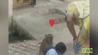 Funny   Shocking   Monkey and Toddler Sitting and Playing   India News