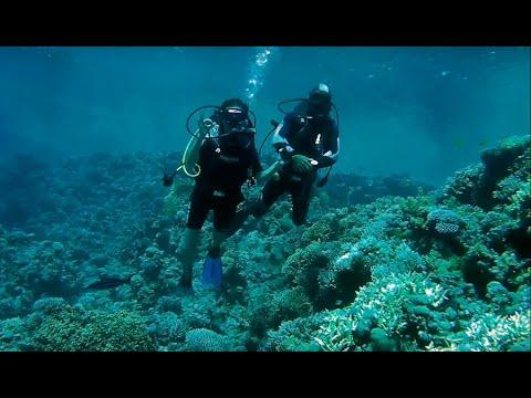 Подводные съемки в Красном море, Египет спустя 2 года. (Underwater Shooting In The Red Sea )